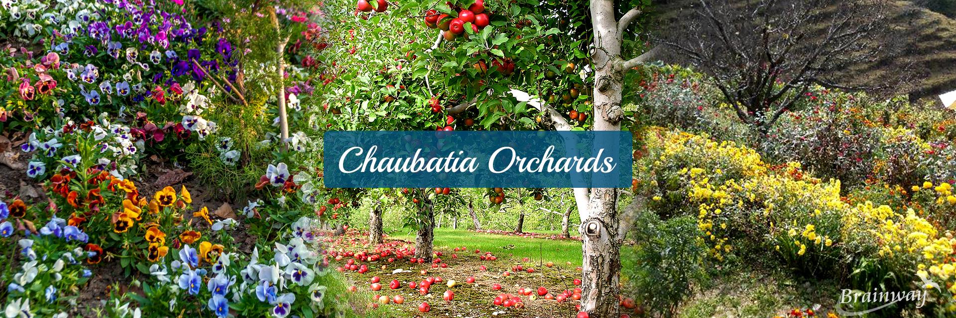 Chaubatia Orchards